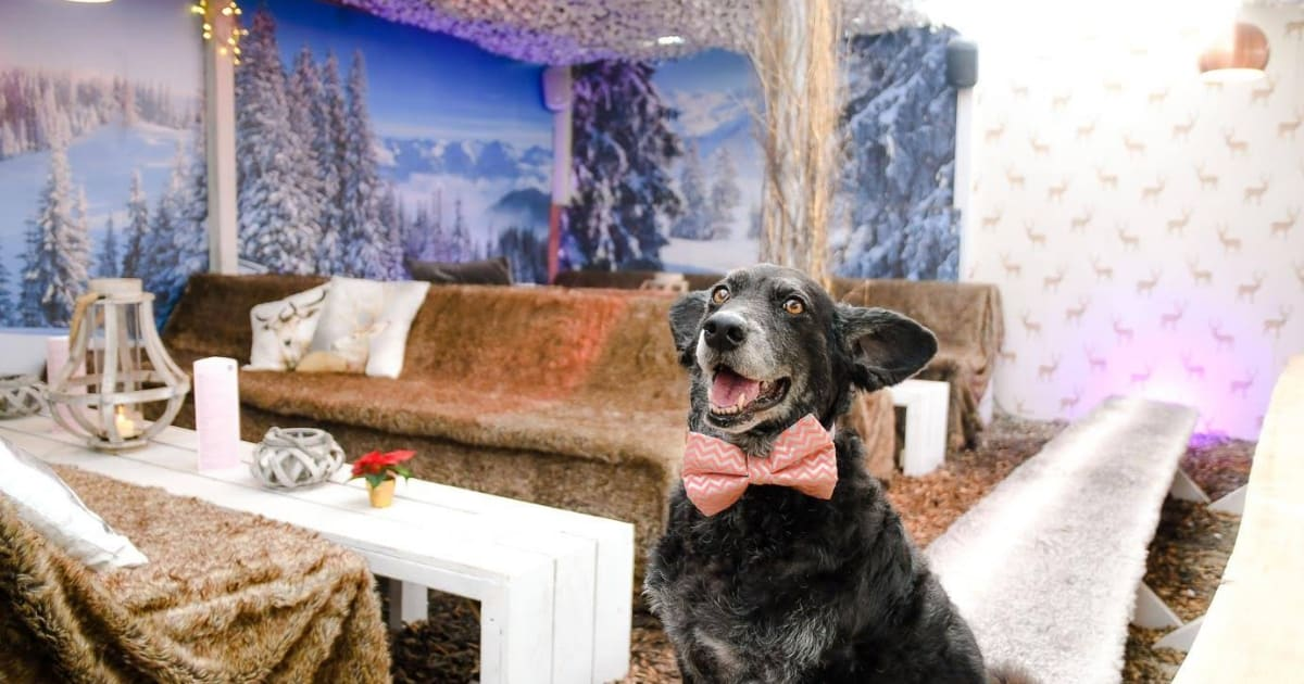Dog-friendly Winterland Alpine Club   All You Need to Know