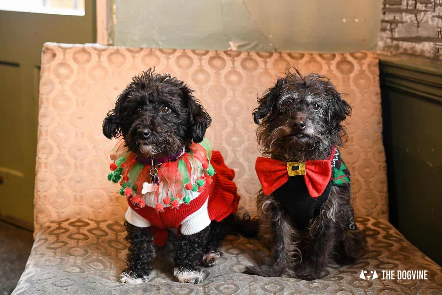 Dogs of the Windmill Clapham Dog Christmas Jumper Competition 19