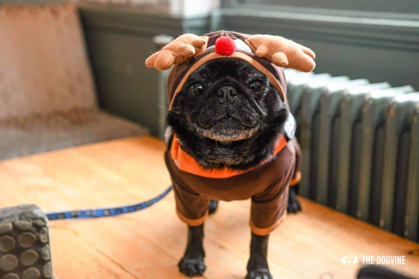 Dogs of the Windmill Clapham Dog Christmas Jumper Competition 2