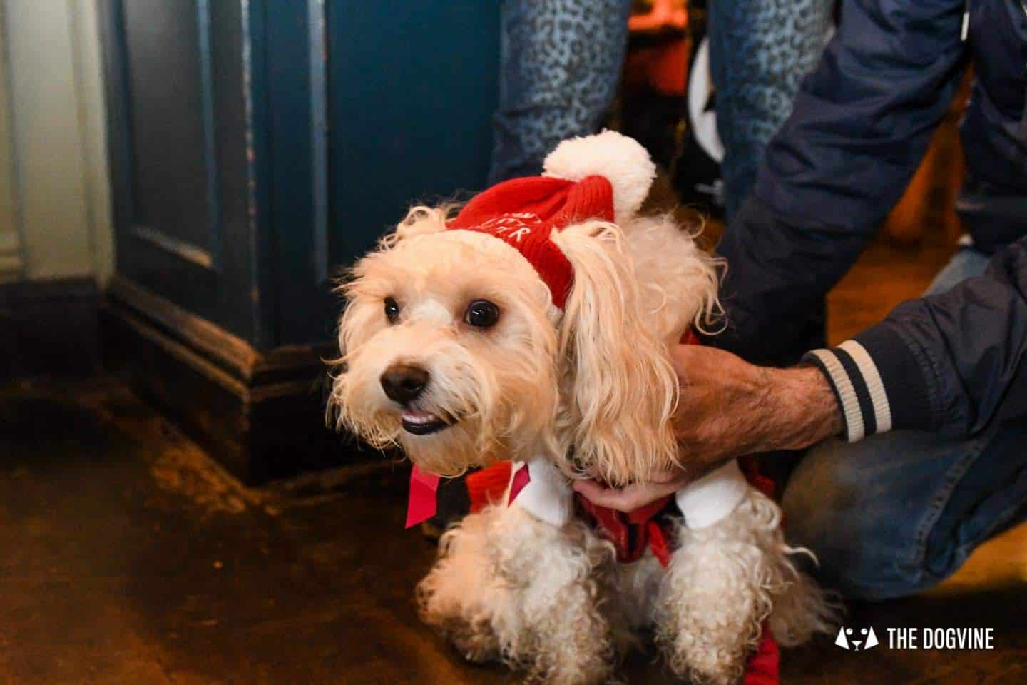 Dogs of the Windmill Clapham Dog Christmas Jumper Competition 21