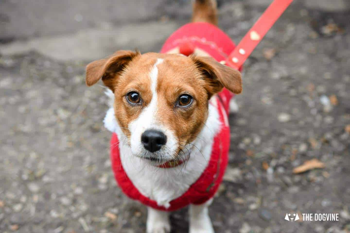 Dogs of the Windmill Clapham Dog Christmas Jumper Competition 22