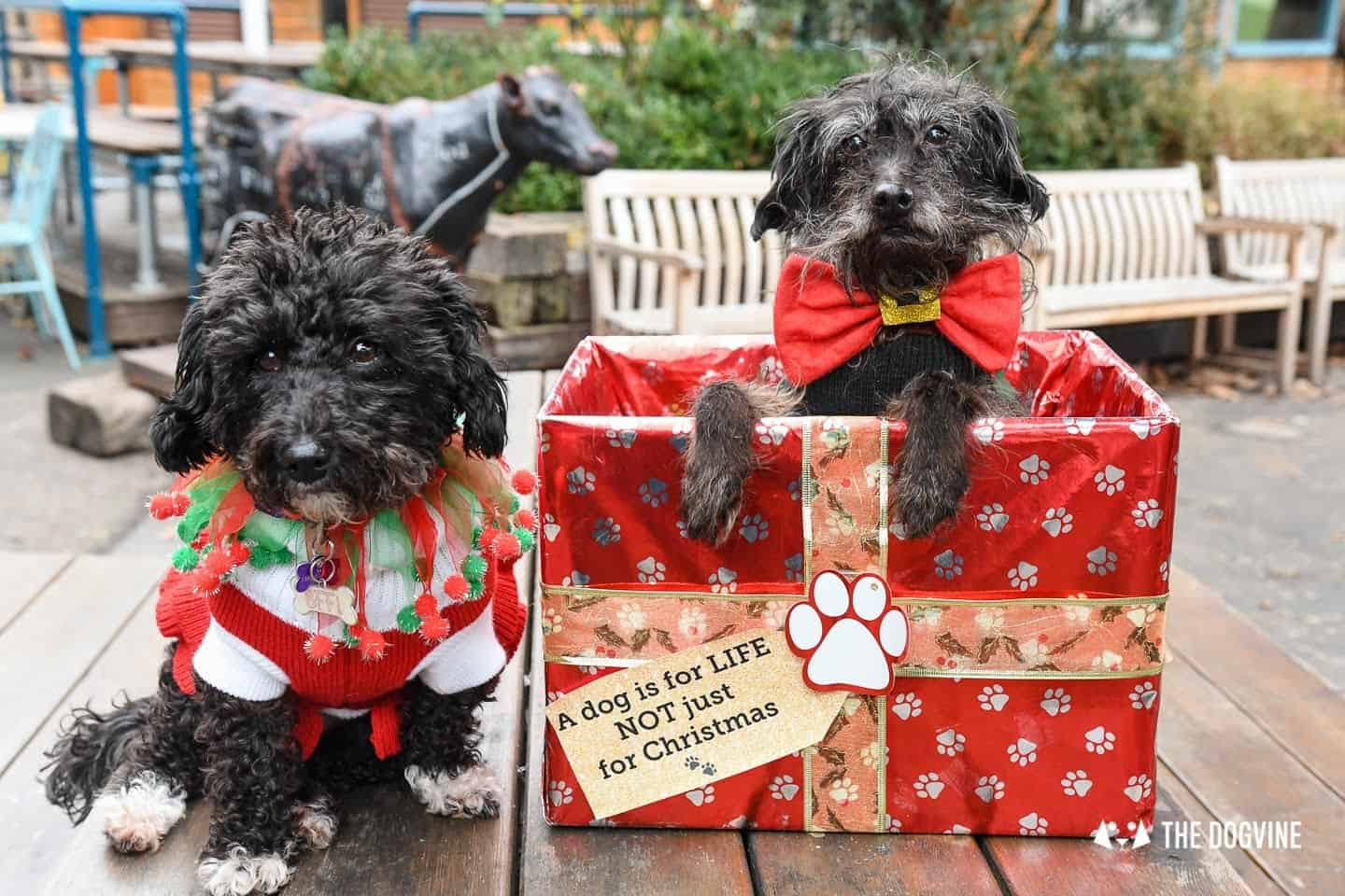 Dogs of the Windmill Clapham Dog Christmas Jumper Competition 27