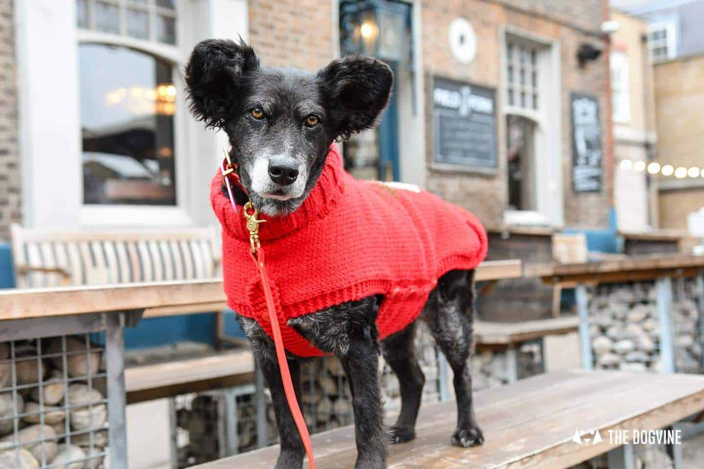 Dogs of the Windmill Clapham Dog Christmas Jumper Competition 48