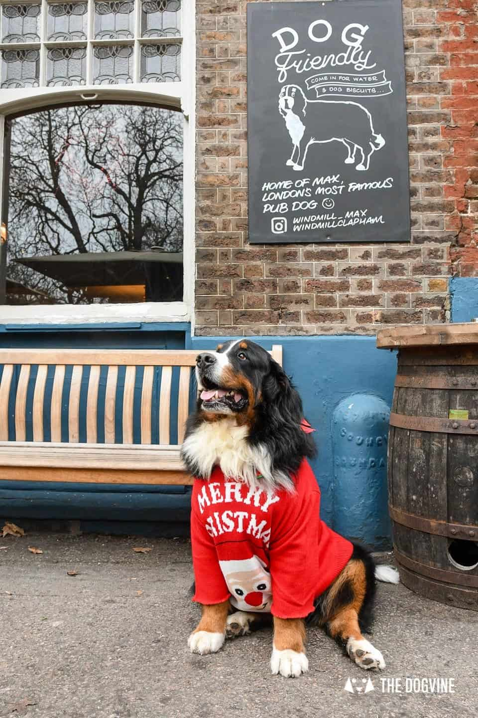 Dogs of the Windmill Clapham Dog Christmas Jumper Competition 9