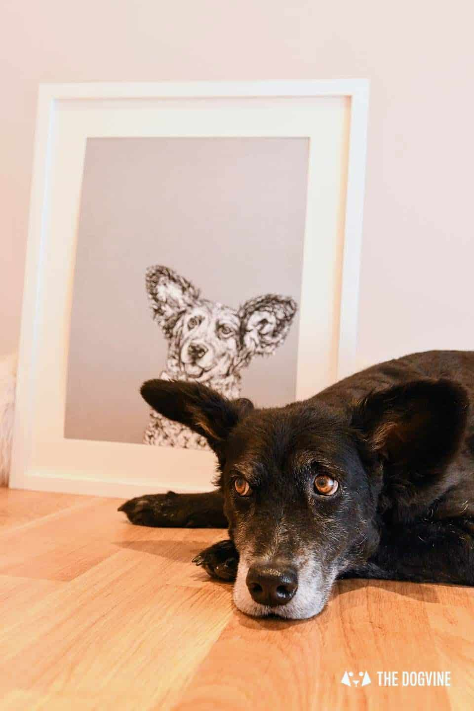 London Dog Portraits To Make You Smile - Rebecca Harrison Designs - Belinha and portrait