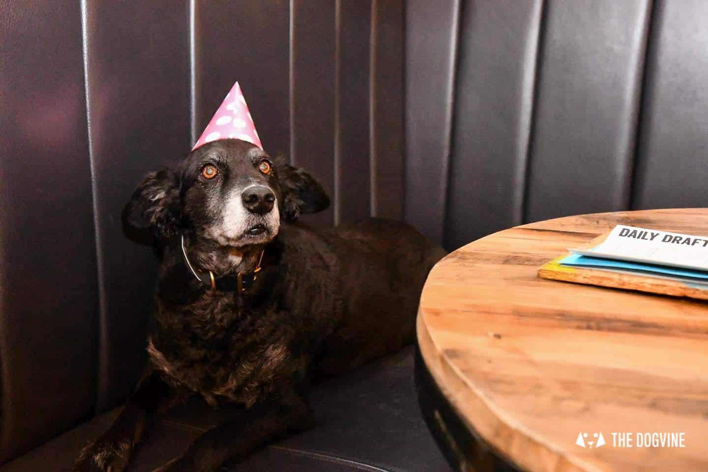 A Brewdog Dog Birthday Party to Celebrate Hemingway's Big Day 10
