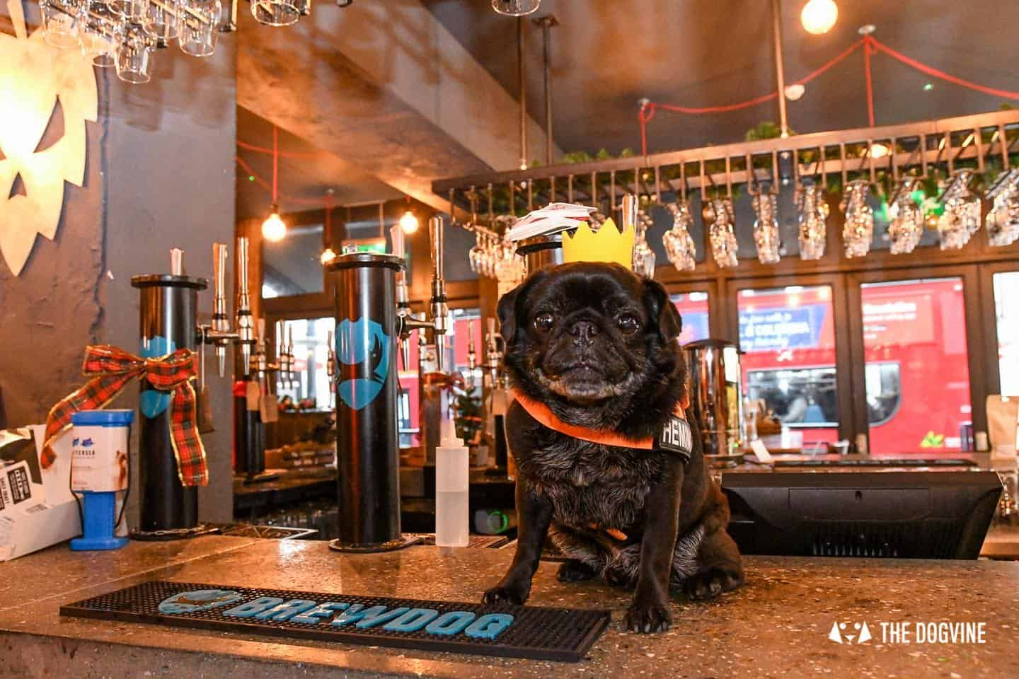 A Brewdog Dog Birthday Party to Celebrate Hemingway's Big Day 17