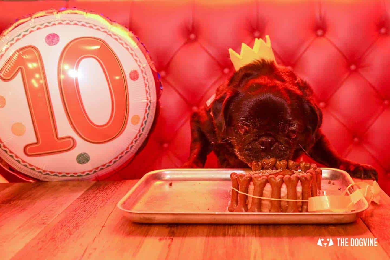 A Brewdog Dog Birthday Party to Celebrate Hemingway's Big Day 2