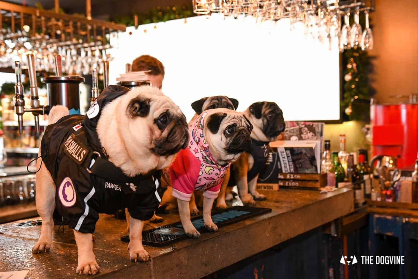 A Brewdog Dog Birthday Party to Celebrate Hemingway's Big Day 20