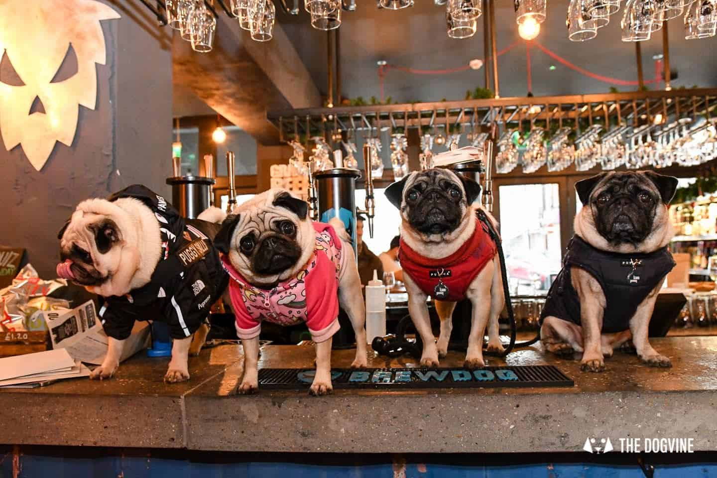A Brewdog Dog Birthday Party to Celebrate Hemingway's Big Day 21