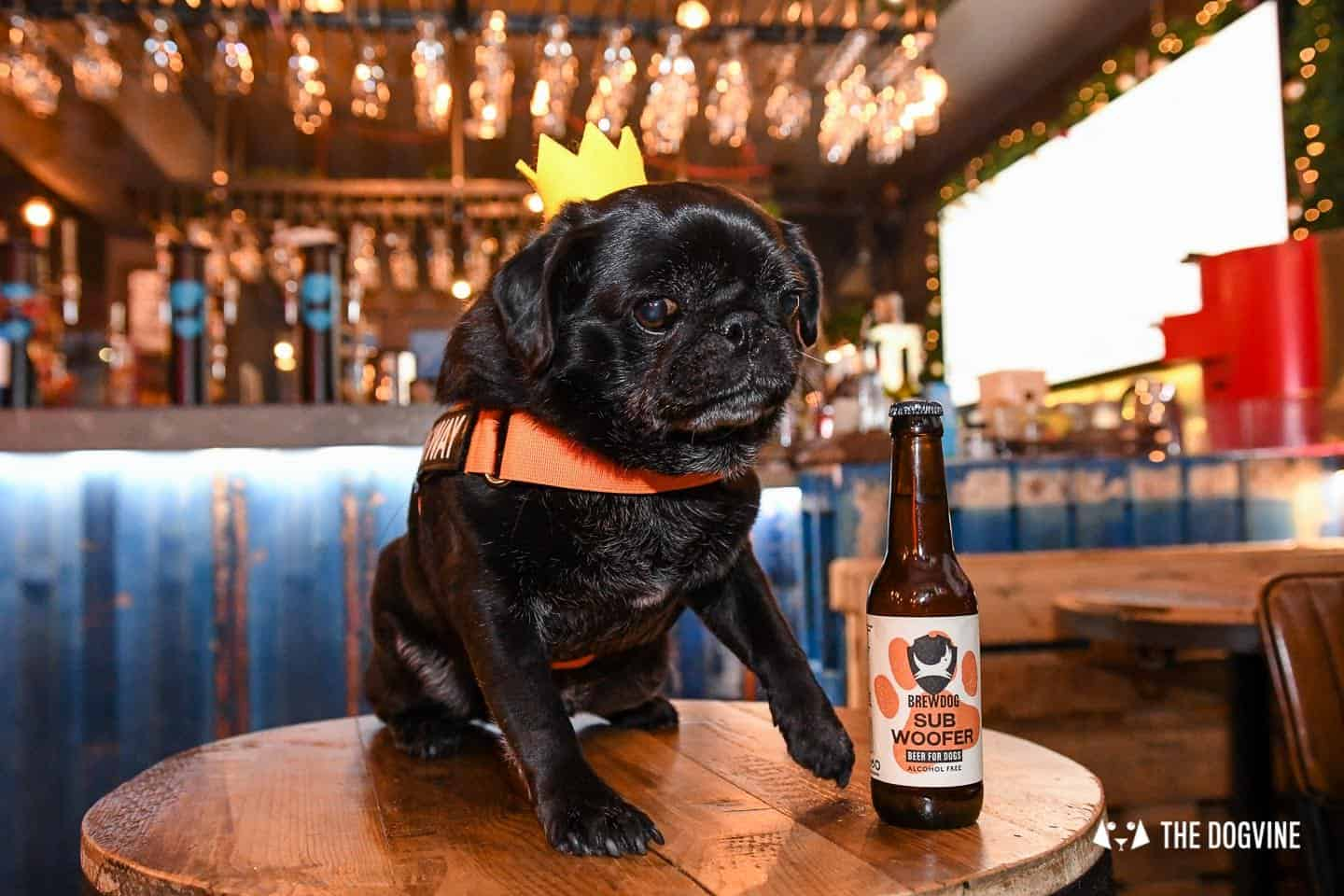 A Brewdog Dog Birthday Party to Celebrate Hemingway's Big Day 26