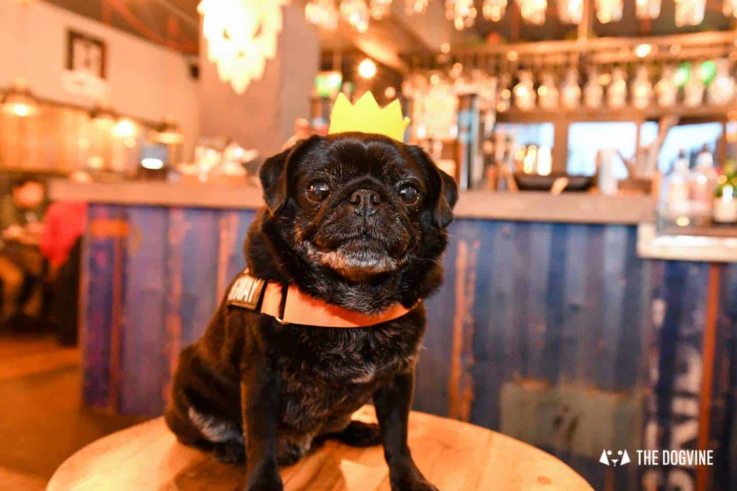 A Brewdog Dog Birthday Party to Celebrate Hemingway's Big Day 28