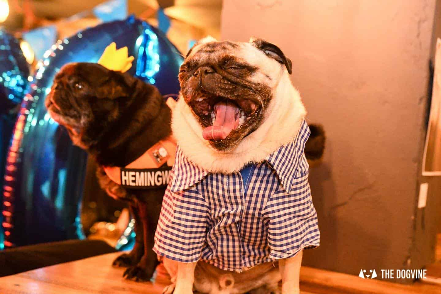A Brewdog Dog Birthday Party to Celebrate Hemingway's Big Day 31