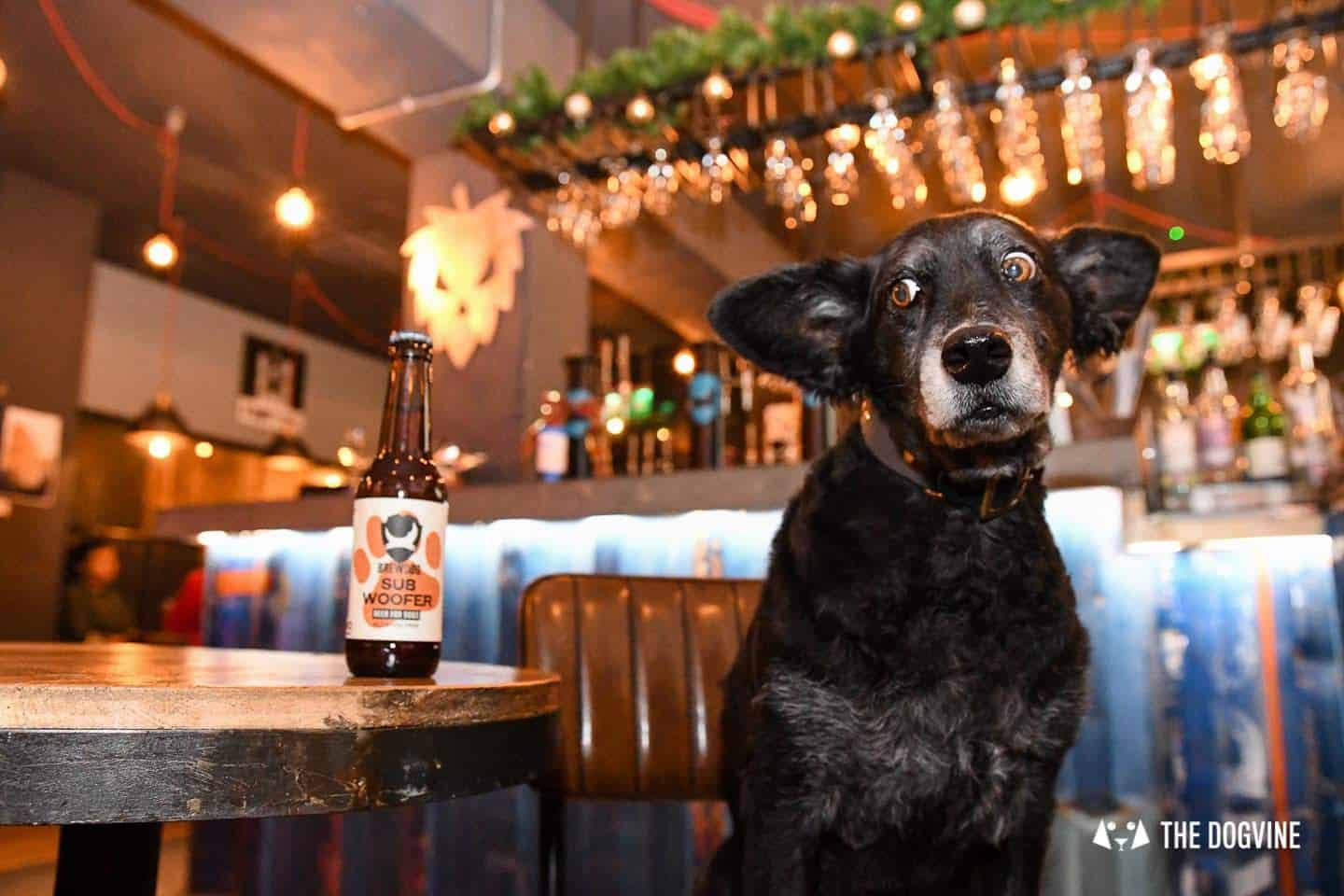 A Brewdog Dog Birthday Party to Celebrate Hemingway's Big Day 6