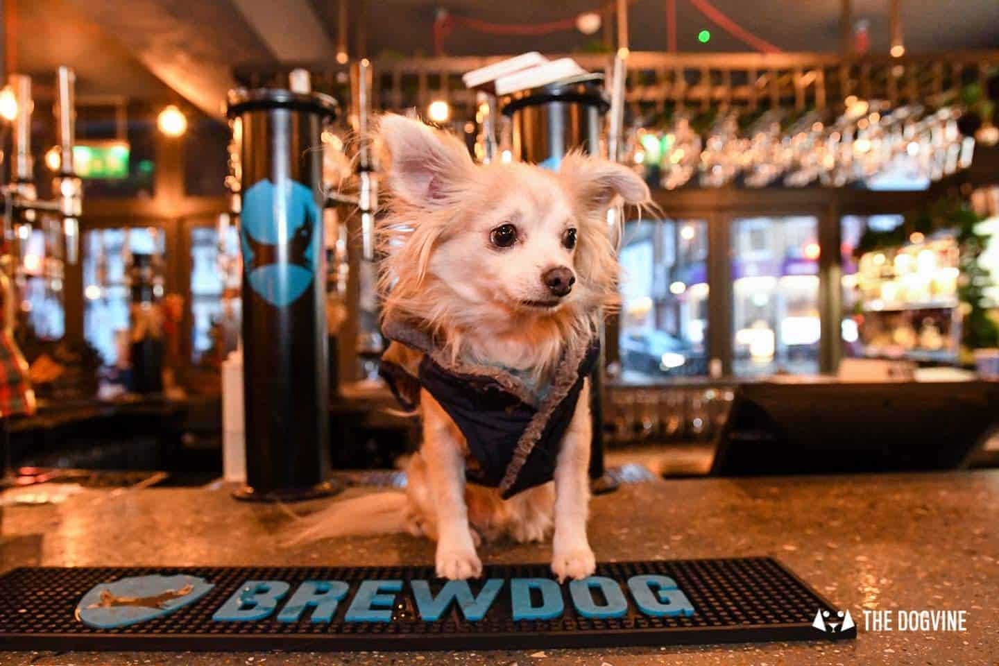A Brewdog Dog Birthday Party to Celebrate Hemingway's Big Day 7