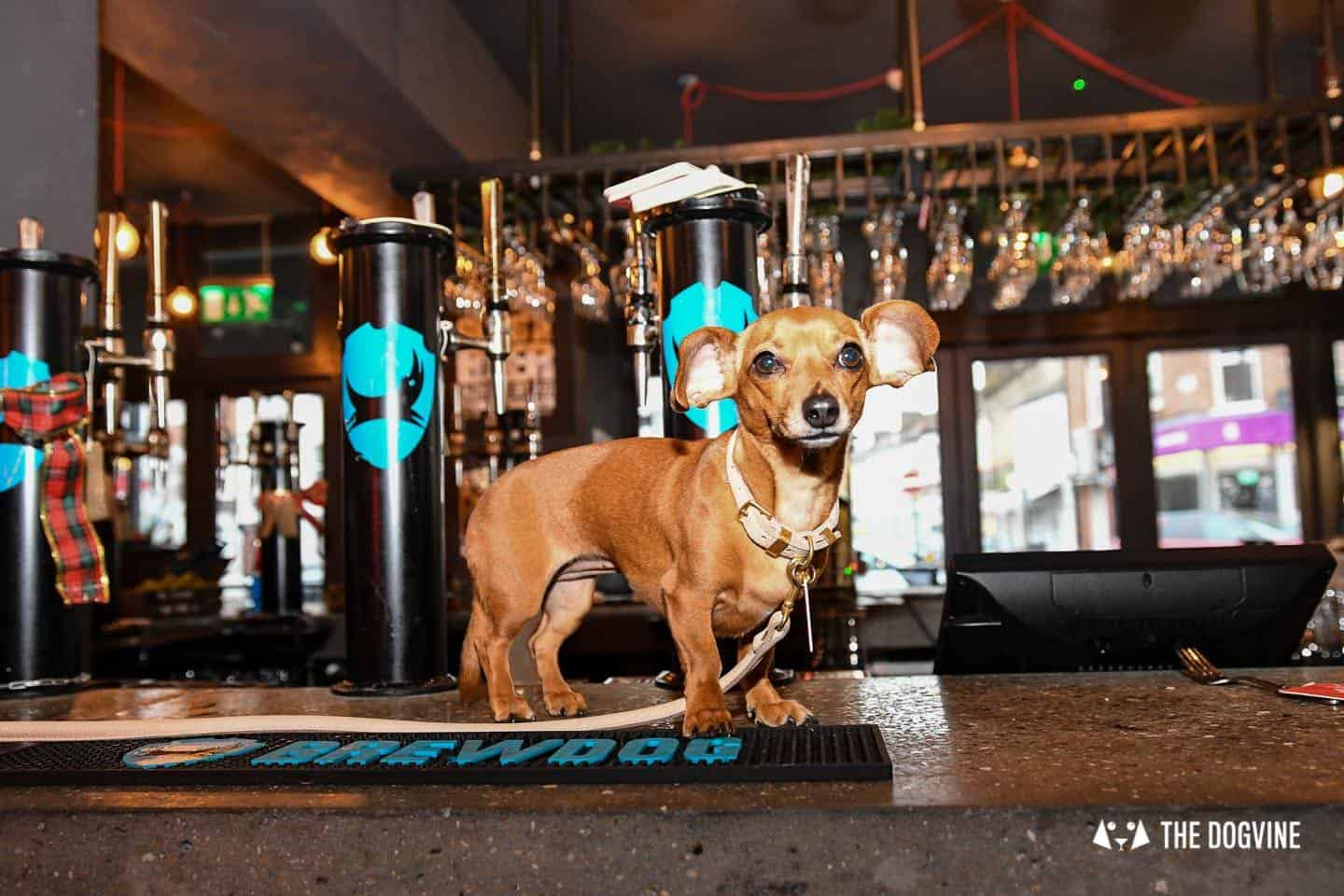 A Brewdog Dog Birthday Party to Celebrate Hemingway's Big Day 9