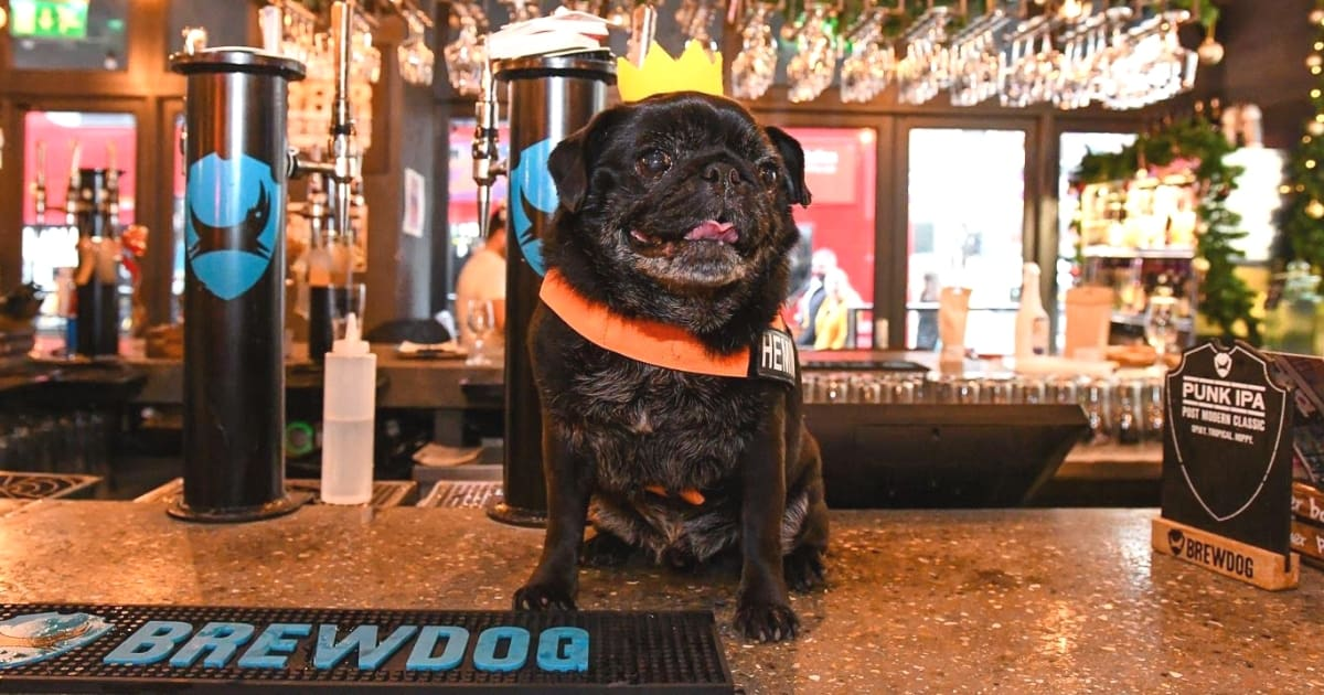 A Brewdog Dog Birthday Party to Celebrate Hemingway's Big Day