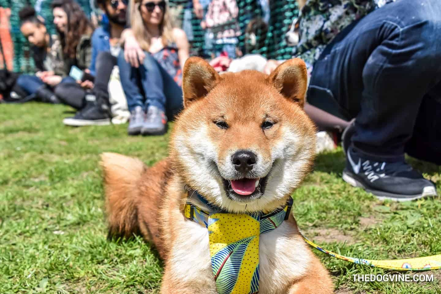 All Dogs Matter Great Hampstead Bark Off 2019
