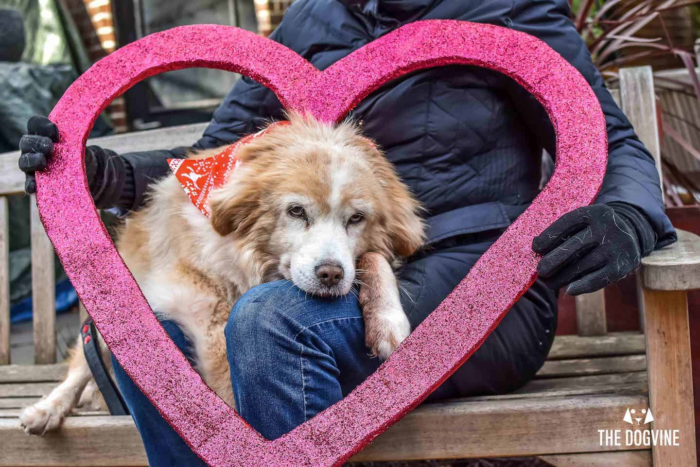 All Dogs Matter Valentines Walk 2019
