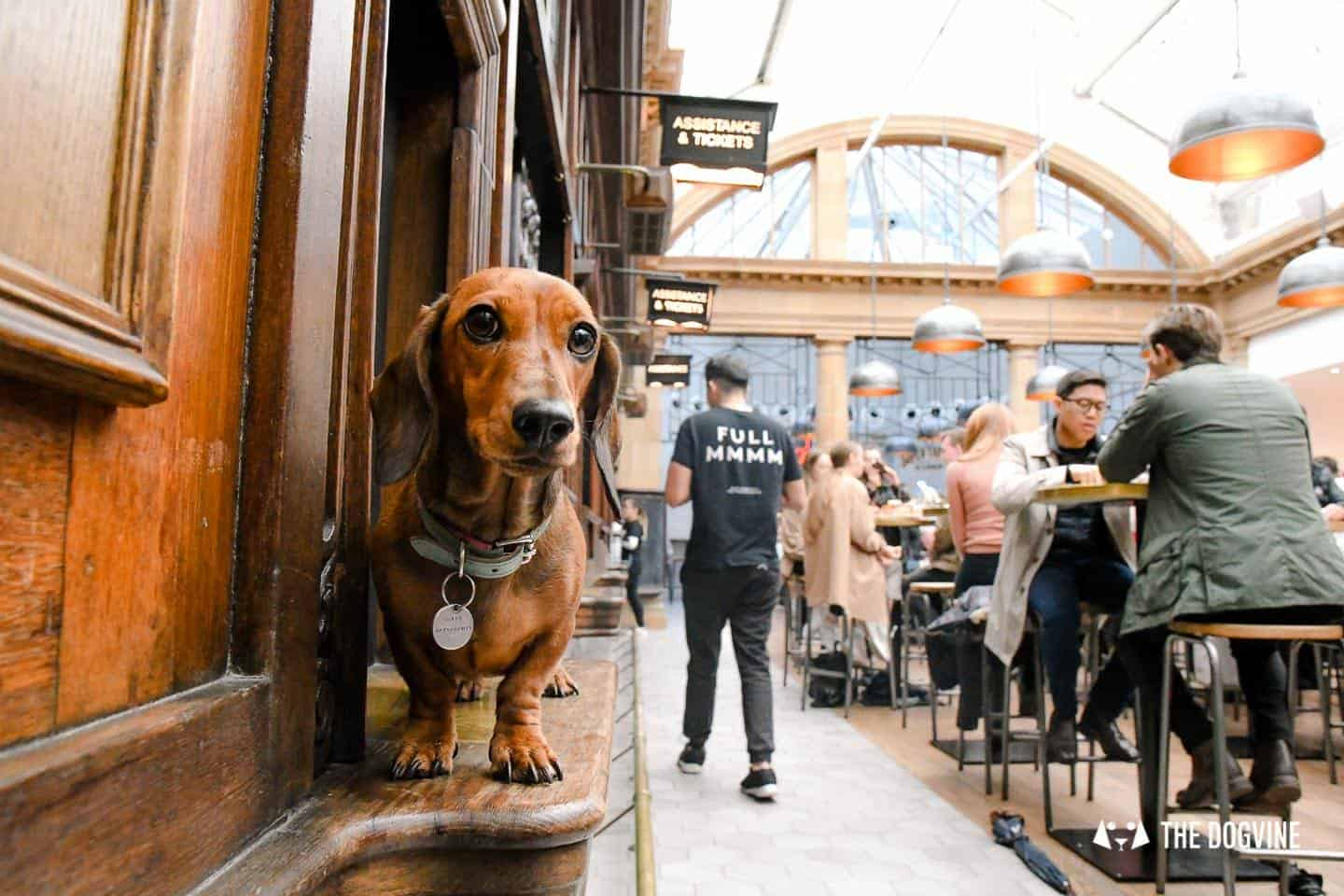 Best Dog-friendly Street Food Markets and Halls in London - Market Hall Fulham Train Station