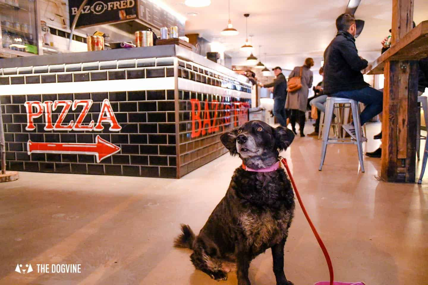 Best Dog-friendly Street Food Markets and Halls in London - Flat Iron Square Indoors