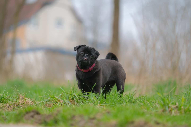 Croydon Dog Social Walk