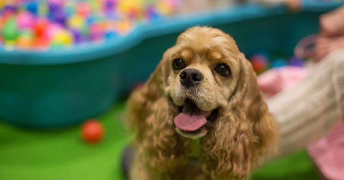 Discover Dogs 2019 The Kennel Club