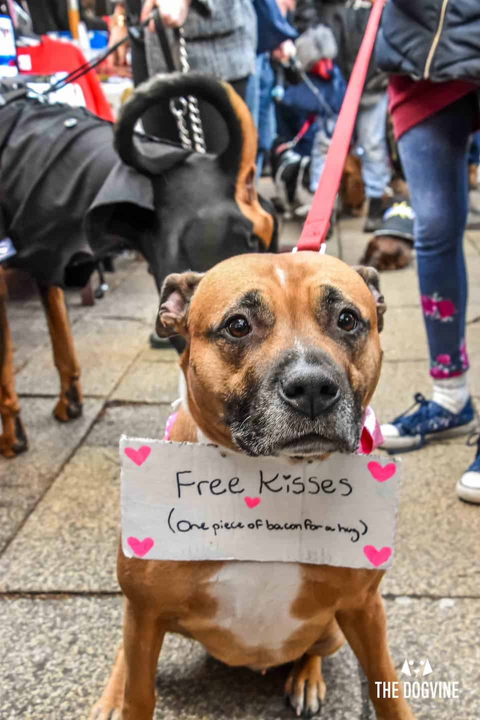 Dog Events In London This Month | Valentines Edition 2019 - Valentines Dog 2