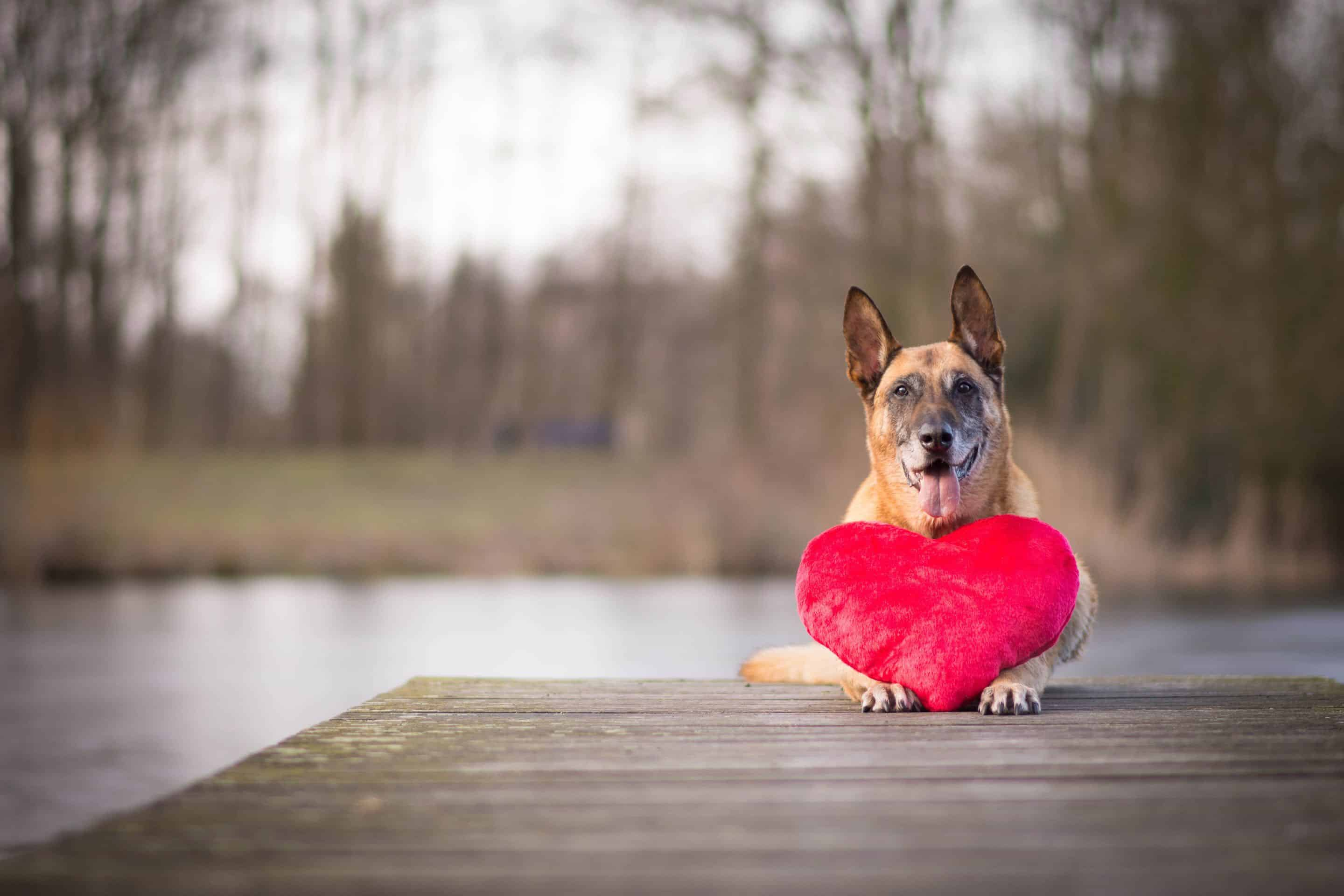 Dog Events In London Valentines 2019 Edition Dog With Valentines Cushion