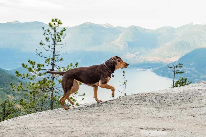 Dog-Friendly Islington | A Dog's Way Home - Bella's Epic Journey