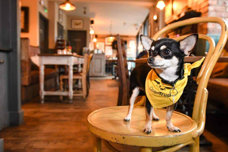Dog-Friendly Islington | A Dog's Way Home Takeover - Bella At The Narrowboat Islington