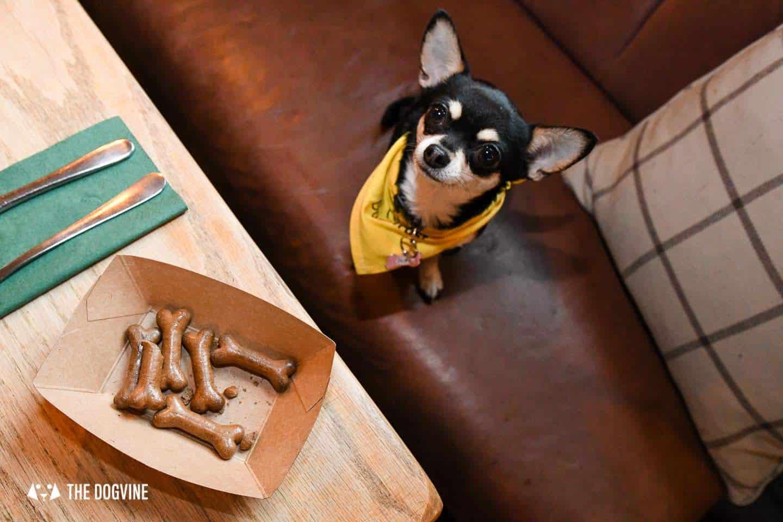 Dog-Friendly Islington | A Dog's Way Home Takeover - Bella Gets Treats At The Narrowboat Islington
