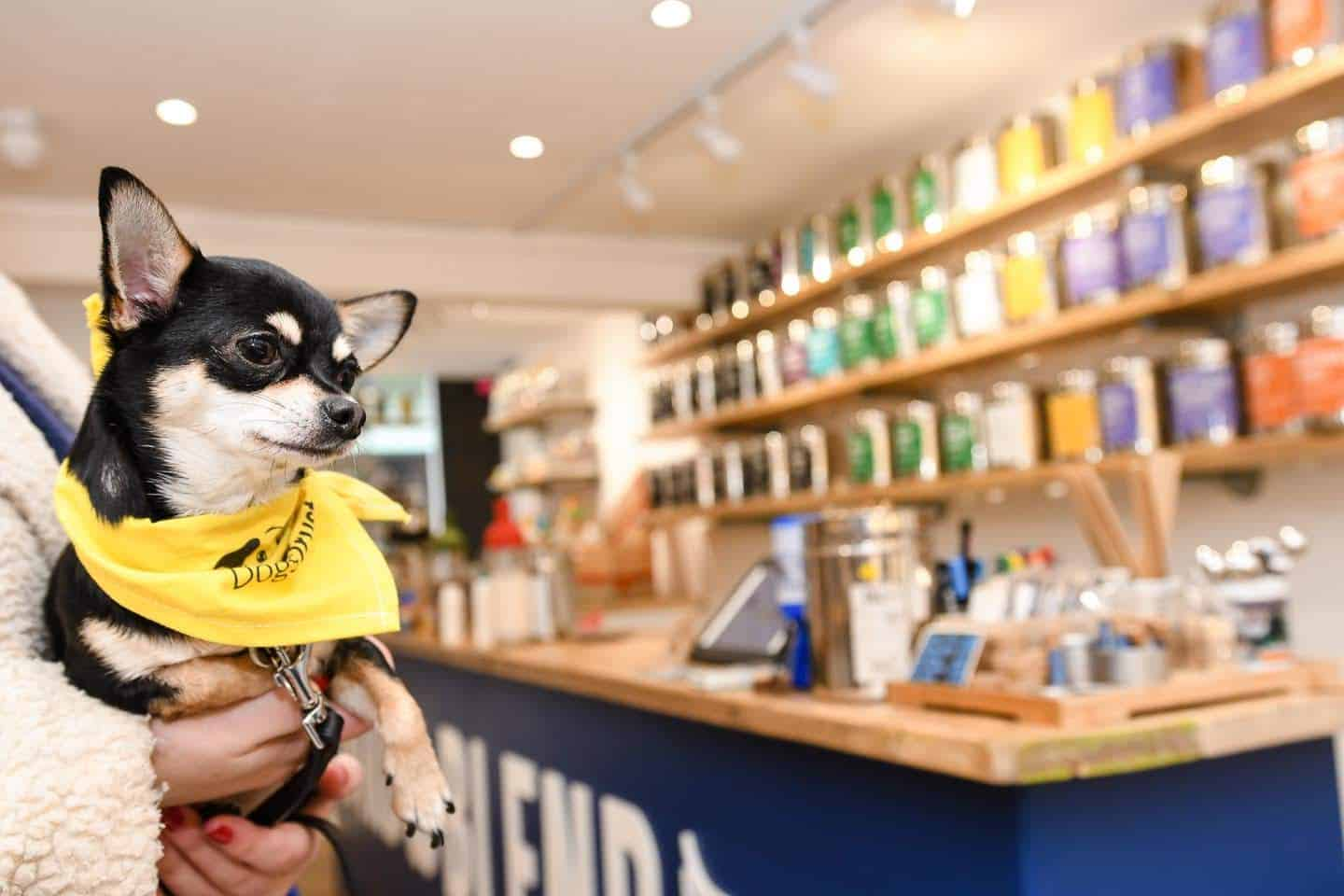 Dog-Friendly Islington | A Dog's Way Home Takeover - Bella Shops At Bird and Blend Tea Co