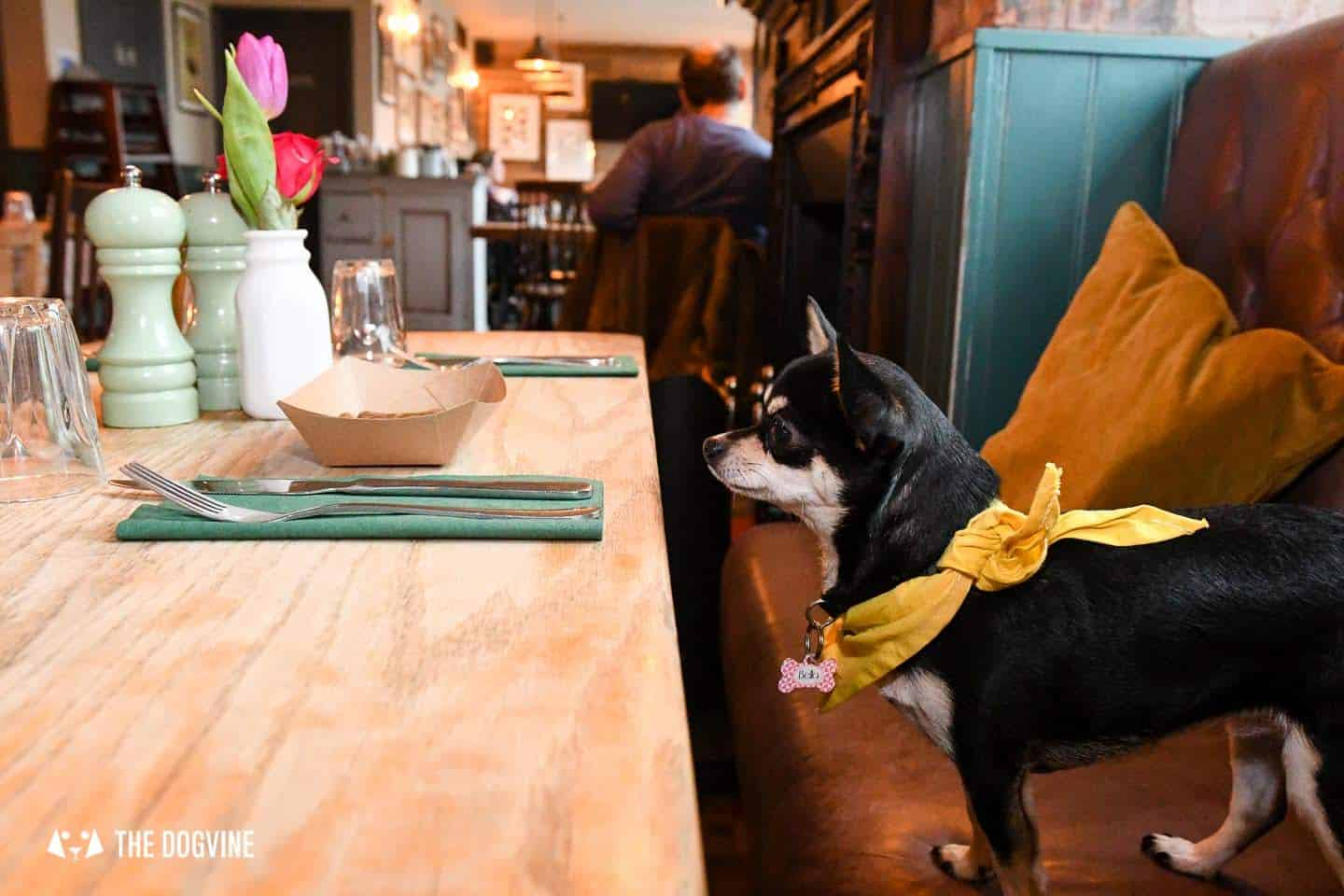 Dog-Friendly Islington | A Dog's Way Home Takeover - Bella Waits For Treats At The Narrowboat