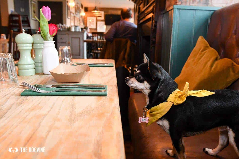 Dog-Friendly Islington | A Dog's Way Home Takeover - Bella Waits For Treats At The Narrowboat