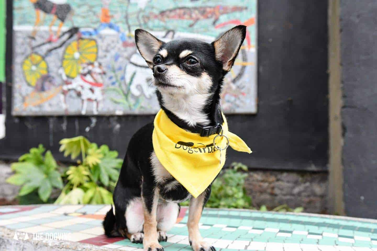 Dog-Friendly Islington | A Dog's Way Home Takeover - Bella in Islington