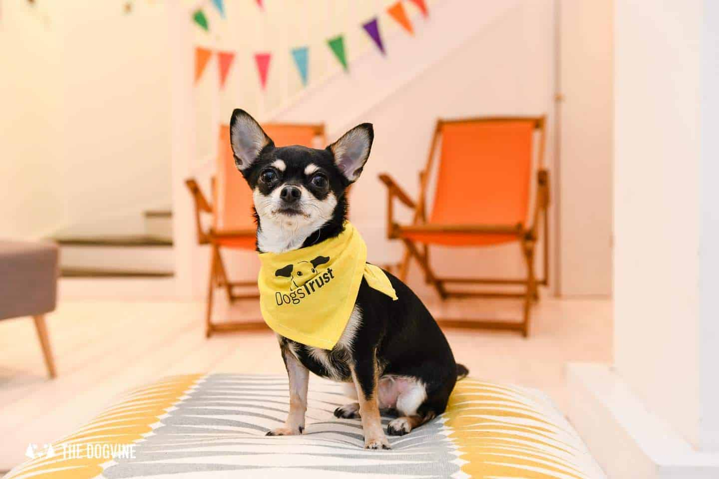 Dog-Friendly Islington | A Dog's Way Home Takeover - Bird and Blend Tea Cafe Downstairs
