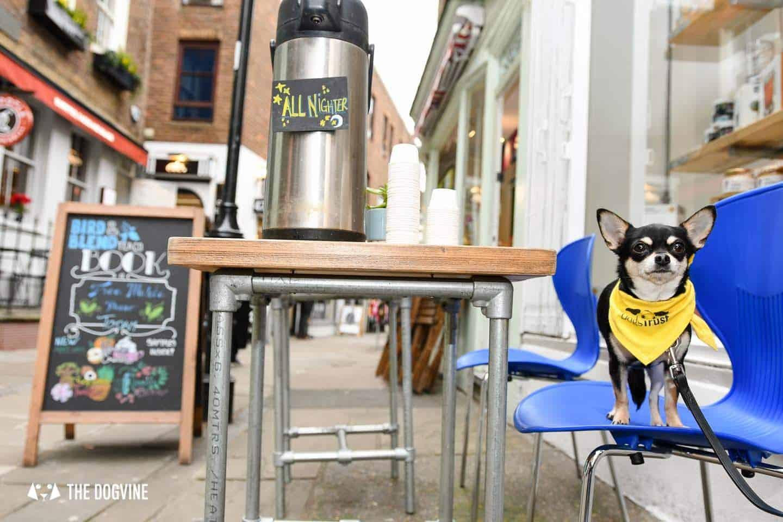 Dog-Friendly Islington | A Dog's Way Home Takeover - Bird and Blend Tea Outside Cafe