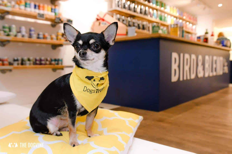 Dog-Friendly Islington | A Dog's Way Home Takeover - Bird and Blend Tea Shop