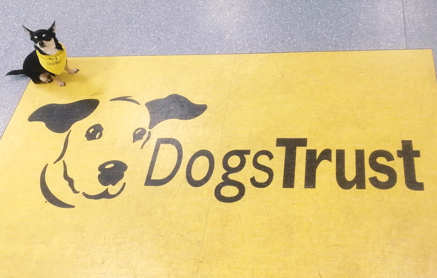 Dog-Friendly Islington | A Dog's Way Home Takeover By Bella Dogs Trust Office Dog Banner