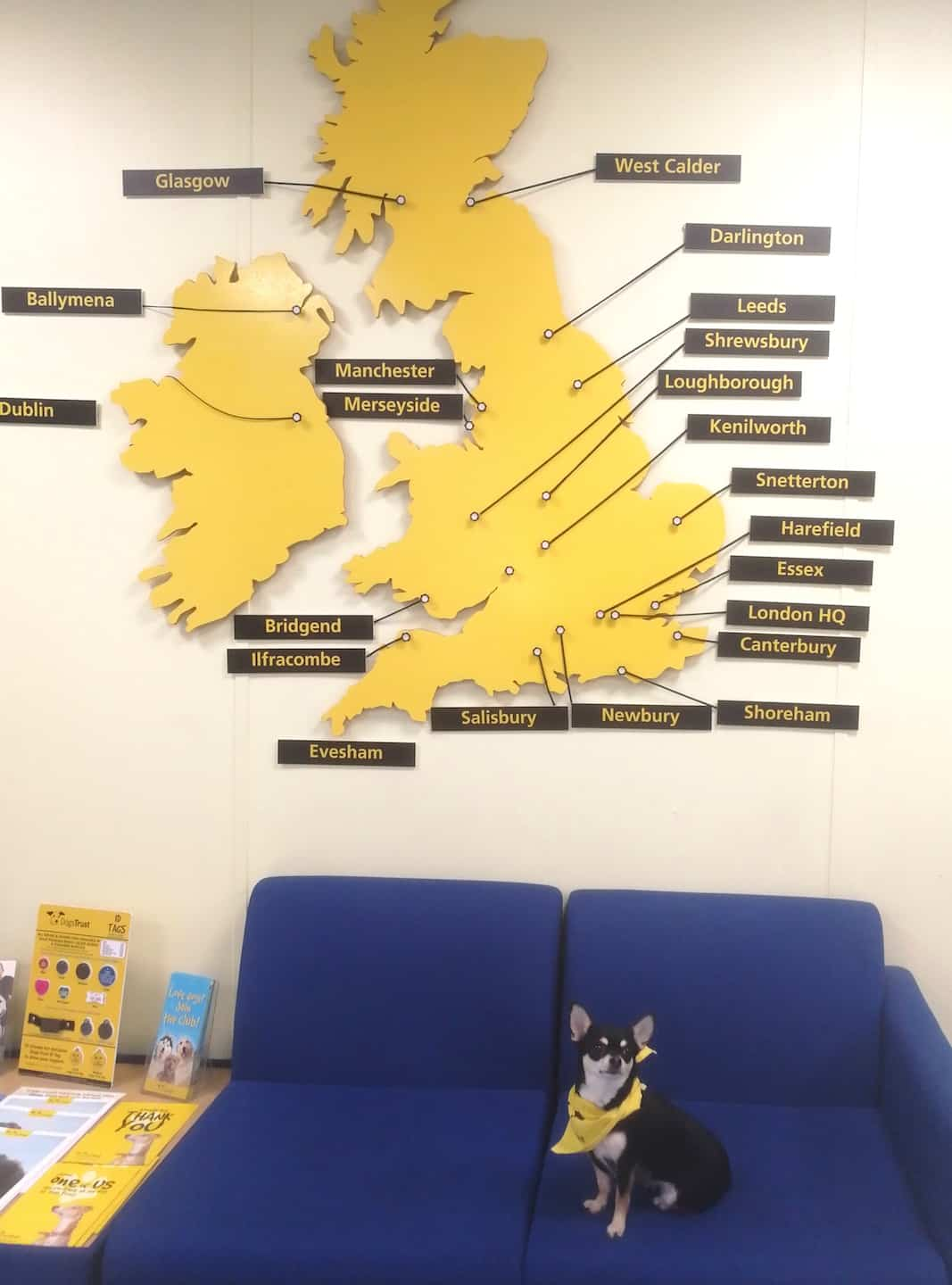 Dog-Friendly Islington | A Dog's Way Home Takeover By Bella Dogs Trust Office Dog On Duty