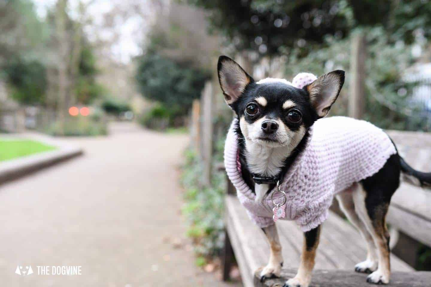 Dog-Friendly Islington | A Dog's Way Home Takeover - Duncan Terrace Gardens - Bella