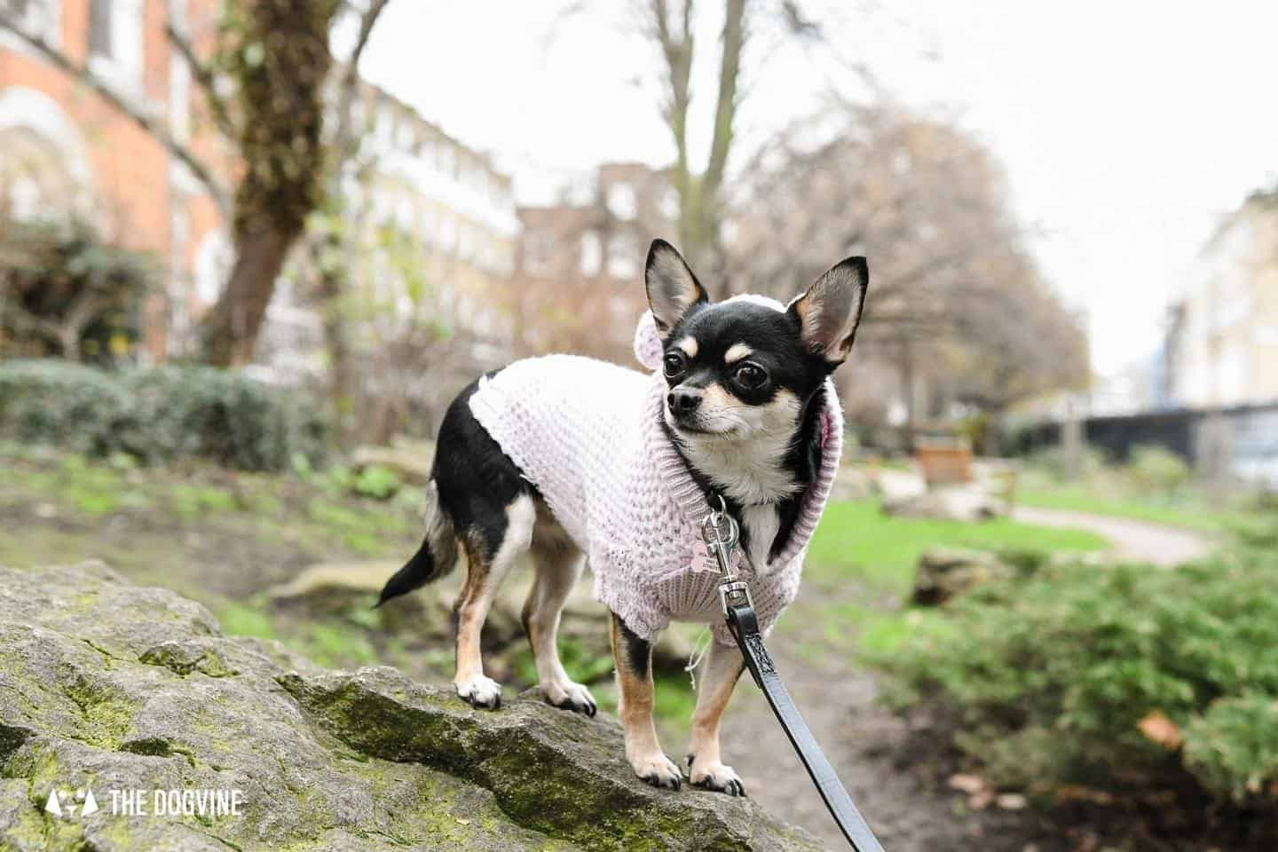 Dog-Friendly Islington | A Dog's Way Home Takeover - Duncan Terrace Gardens