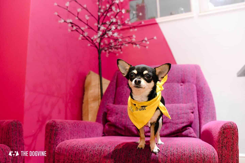 Dog-Friendly Islington | A Dog's Way Home Takeover - Jaz and Jul's Chocolate House Cafe