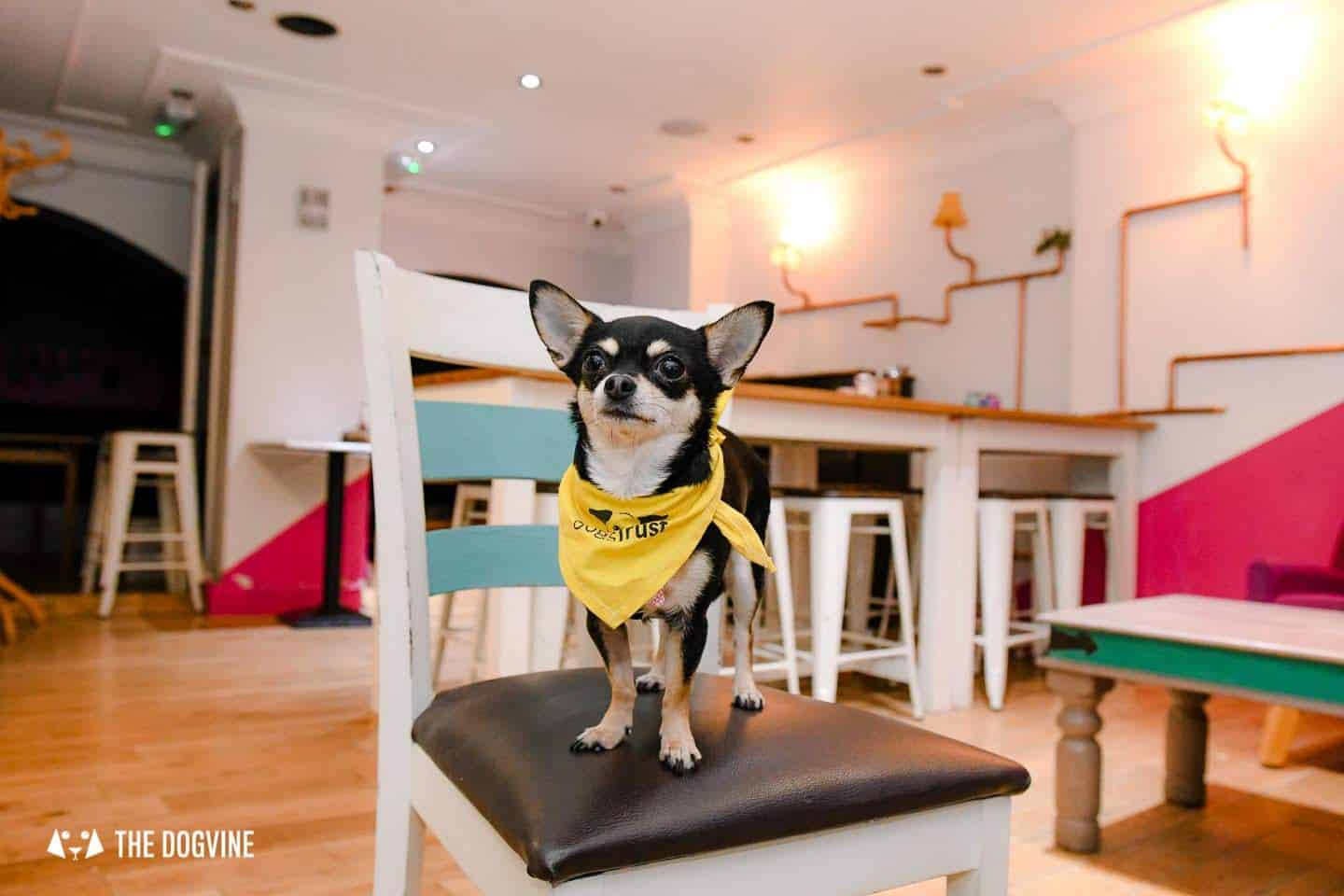 Dog-Friendly Islington | A Dog's Way Home Takeover - Jaz and Jul's Chocolate House Downstairs Cafe