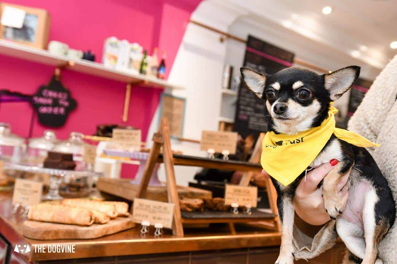 Dog-Friendly Islington | A Dog's Way Home Takeover - Jaz and Jul's Chocolate House