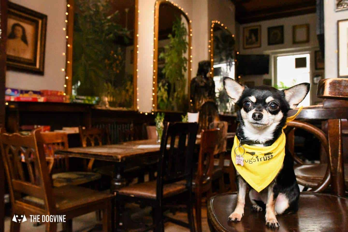 Dog-Friendly Islington | A Dog's Way Home Takeover - The Island Queen