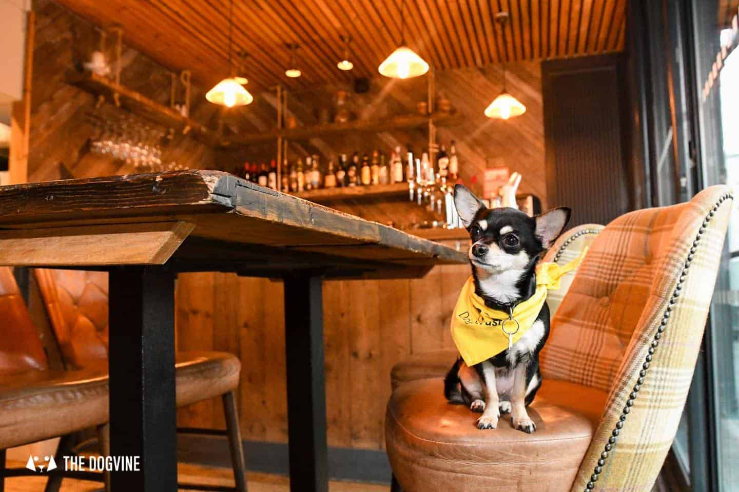 Dog-Friendly Islington | A Dog's Way Home Takeover - The Narrowboat Bar Downstairs