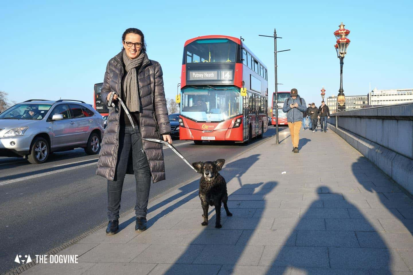 Dog Road Safety | How Safe Are You On London's Roads 10