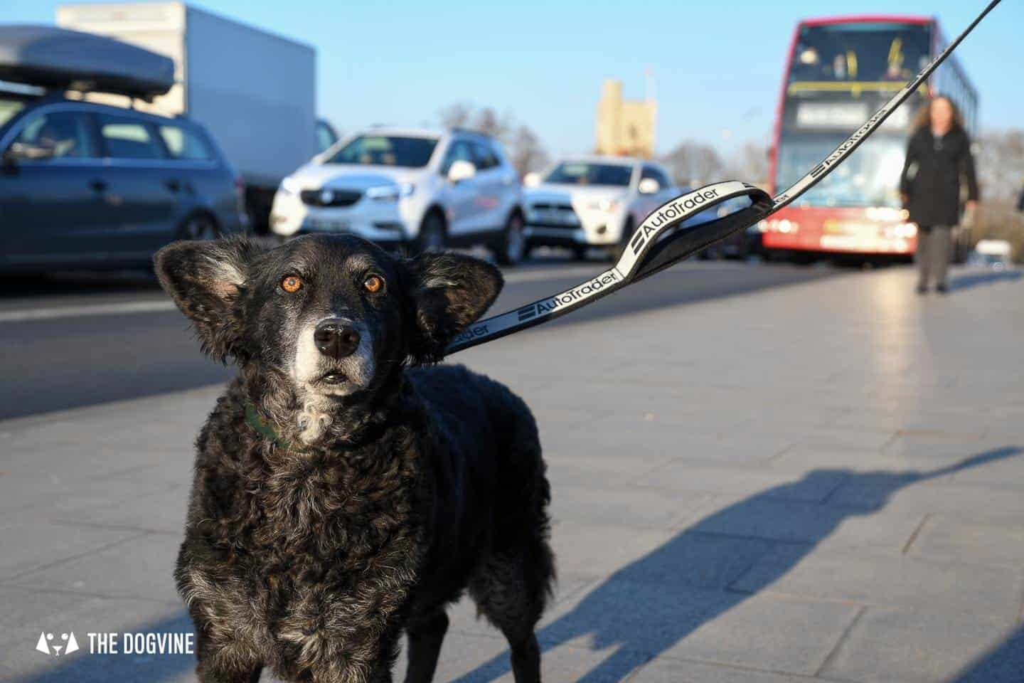 Dog Road Safety | How Safe Are You On London's Roads 15